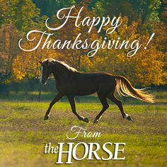 thanksgiving-horse