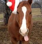 christmas-horse-2