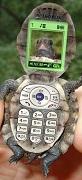 turtlephone